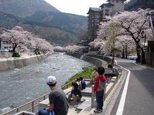 【外観】4月中旬から下旬は桜並木が目の前に。3か所の足湯めぐりも楽しめます