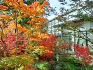 【景観】紅葉の庭園(11月上旬頃)
