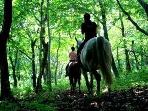 【夏】乗馬トレッキング 森の中を馬に乗って散策♪