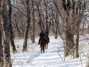 【冬】乗馬トレッキング 冬の森の中を馬に乗って散策♪