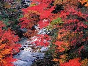 天然温泉掛け流しの宿 望山荘の画像