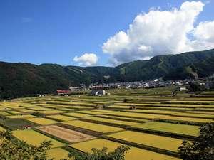 野沢温泉のキレイな水と空気。そして農家さんの愛情でこんなに見事な稲が出来ました♪(昨年の写真)