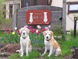 我が家の看板犬ゲンとコウ