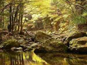 水面が美しい渓谷内。色づく木々の色がそのまま映ります♪