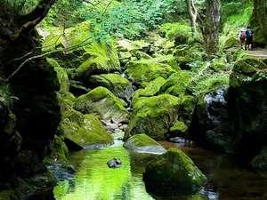 当館から歩いて5分の赤目四十八滝渓谷内。水面には幻想的な色合いが心を癒してくれます。