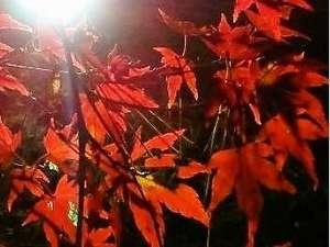 【紅葉】長瀞の紅葉ライトアっプされた紅葉も素敵です