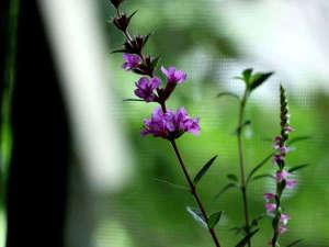 ★お食事処の窓を開けると花々を楽し目ます!