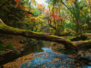 熊本の山々が色づく、紅葉の秋は【10月下旬ごろ】から始まります