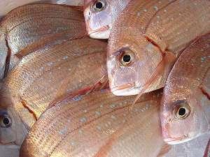 【3月限定】身のしまった、旨みたっぷりの鯛を食べよう!