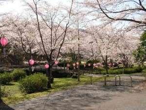 桜の名所 土師ダムまで車で15分♪