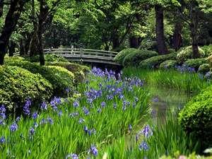 【兼六園】春には桜、初夏にはカキツバタが見頃を迎えます