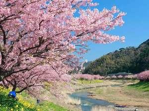 毎年2月~3月に行われるみなみの桜と菜の花祭り