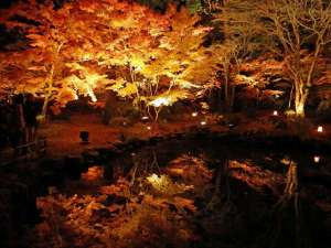 松島紅葉ライトアップ 円通院内の紅葉の様子