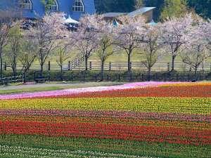 牧歌の里の春