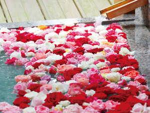【紗の湯:バラ風呂】毎週水曜日はホワイトイオンバスに1,000輪のバラをご用意致します!