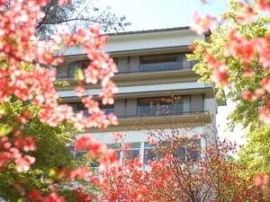 初夏の花に囲まれた当館