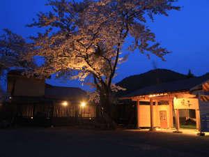 《桜の季節》美しい桜と優しい灯りが幻想的な玄関
