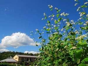 風にゆれるそばの花。里山にある湯宿