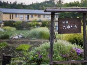 自家菜園「たゆたう」