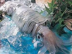 春・夏名物の泳ぎイカ・透明な美しい姿と、活の食感を・天然塩とすだちで