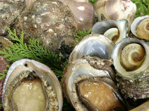 *【旬の海の幸】これらの食材を、こだわりの磯料理に仕上げます。