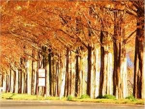 夕日に染まる2.4kmの紅葉のトンネル 見頃は11月下旬~12月頭