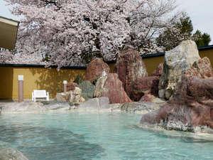 4月上旬。桜満開の男性露天風呂