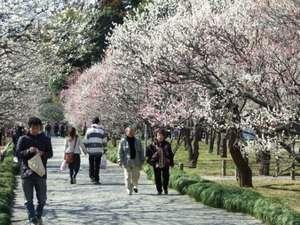 ■偕楽園・弘道館公園【初春】梅まつり