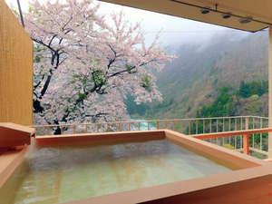 露天風呂付客室(ベッドタイプA)から満開の桜