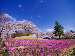 長峰公園◆春には桜の素敵な景色がご覧いただけます♪