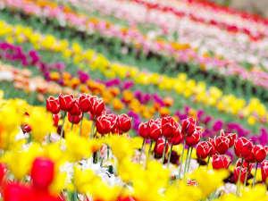 ◆那須フラワーワールド◆色とりどりのチューリップが素敵です!
