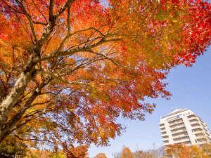 ホテル敷地内の木々も赤や黄色に色づきます♪