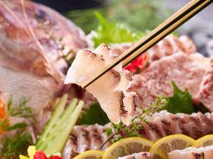 3/1~5/31開催 春の料理フェア 鯛のお刺身
