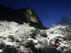 当館敷地内にある御船山楽園で九州最大の桜ライトアップを開催!当館宿泊者は入園無料