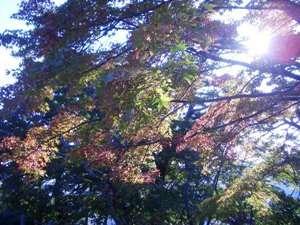秋の観光!日本三大渓谷美「寒霞渓」