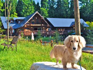 愛犬と泊まれる フェニックスウィング白馬の画像