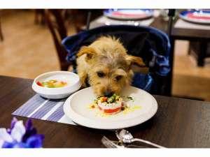 オーナー様と同じテーブルでワンちゃんもご一緒にお食事出来ます(専用カート貸出可)。