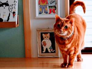 【 猫専用部屋 】 猫ちゃんも、我が家の様に寛いで過ごしています♪