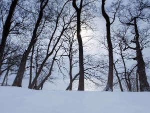 【冬】真っ白な雪原となる洞爺湖畔。高くそびえる木々も冬眠を迎える。