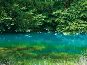 まるで絵具を溶かしたように多彩な色を見せる五色沼。春夏は最も美しい季節。当ホテルから徒歩3分。