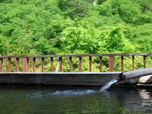 美しい新緑を眺めながら露天風呂でのんびり♪