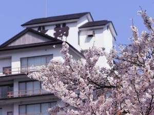 【桜の見頃は4月下旬です】春の訪れを感じてください