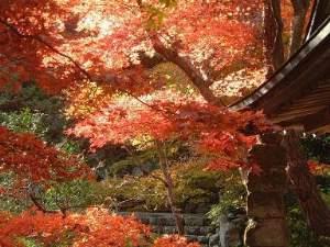 壽亭の日本庭園を彩る紅葉