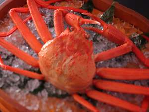 富山湾産上質な紅ズワイガニ。
