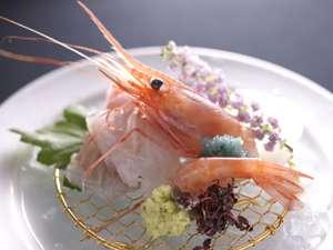 富山海老などの新鮮な地魚のお造り