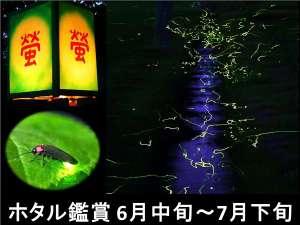 ◆ホタル鑑賞期間:6月15日~7月16日毎晩 20:00頃にホタル鑑賞ツアーにご案内いたします!
