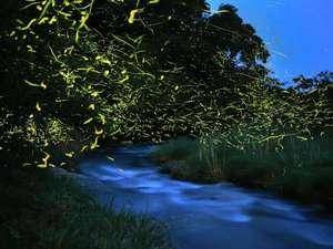 【ホタルバス】幻想的な光のイルミネーションをお楽しみ下さい♪※5月下旬~6月中旬