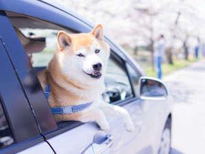 **愛犬と一緒に旅を(イメージ)