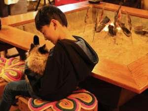 *[囲炉裏]看板猫しろと戯れたり会話を楽しんだり♪みんなの憩いの場所です。
