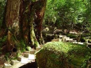 深緑の階段
